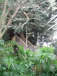 ロビンソンのツリーハウス