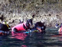 犬も青の洞窟